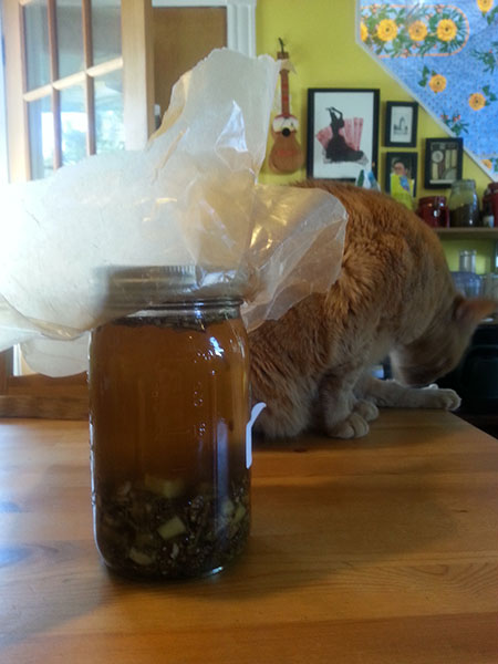 Ginger meets Ginger Tom (Image by Michael Blackmore, Mad Crow Herbalism)